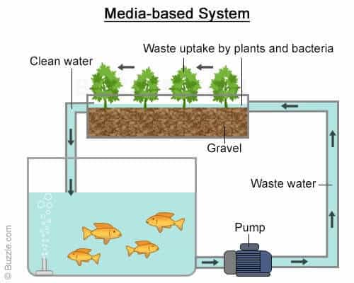 Media Based Aquaponics Systems