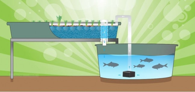 simple flood and drain aquponics