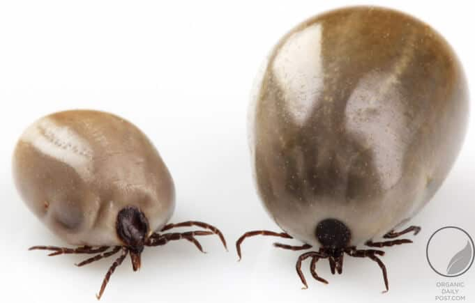2 very ugly ticks