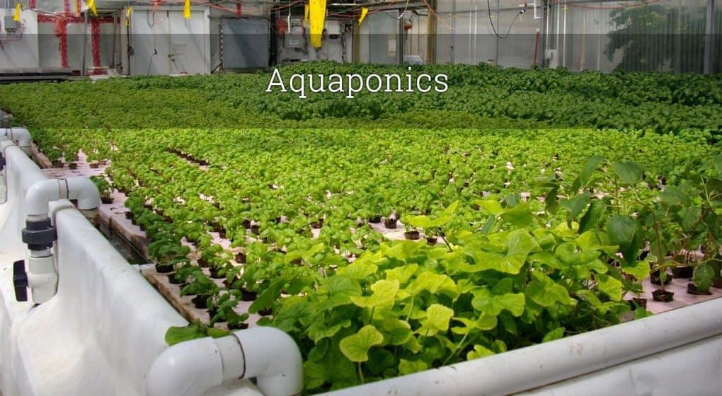 How to do aquaponics
