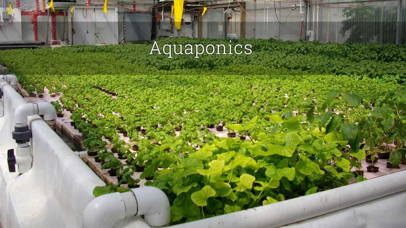 Aquaponics 101 for Aquaponics fish food