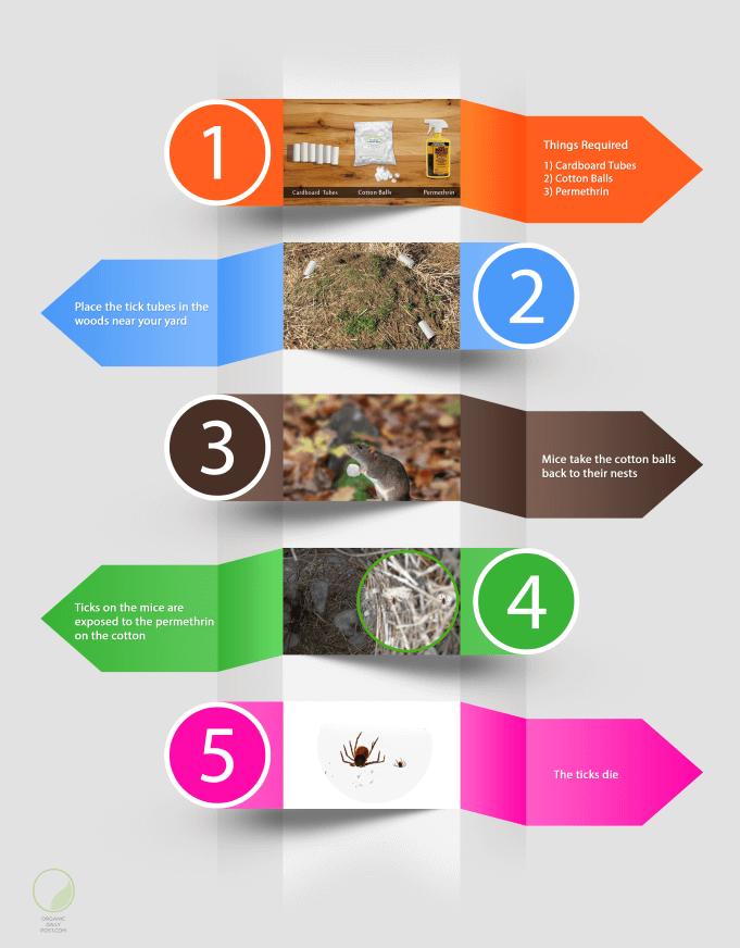 tick tube infographic