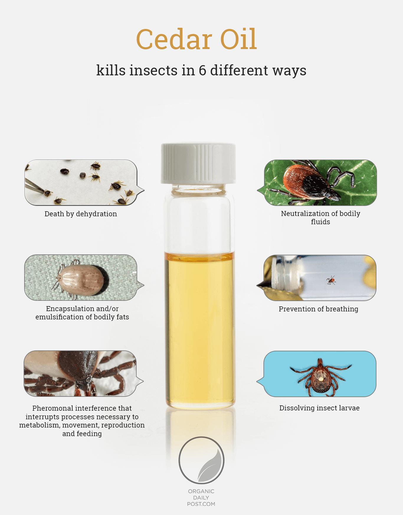 How Cedar Oil Kills Ticks - Infographic