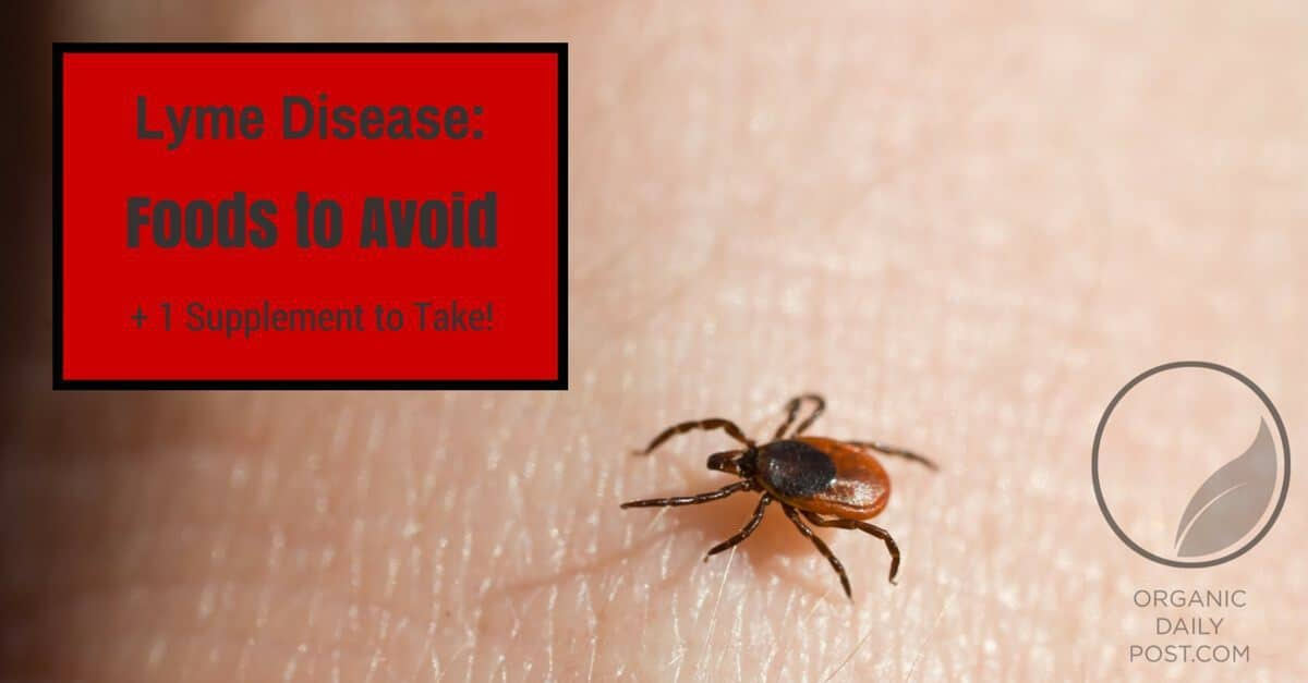 ▷ Have Lyme? Avoid These 3 Foods