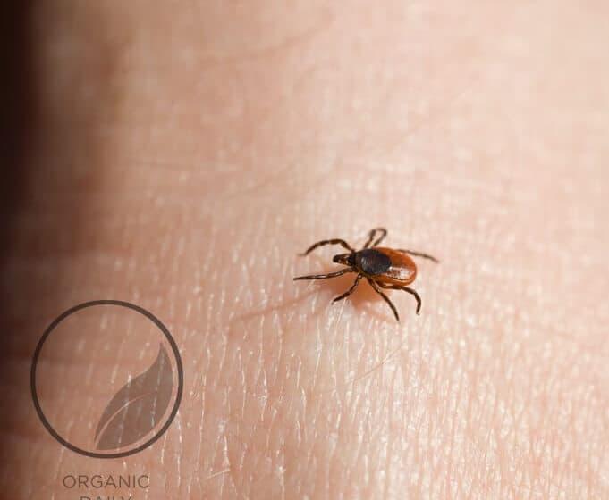 tick on skin