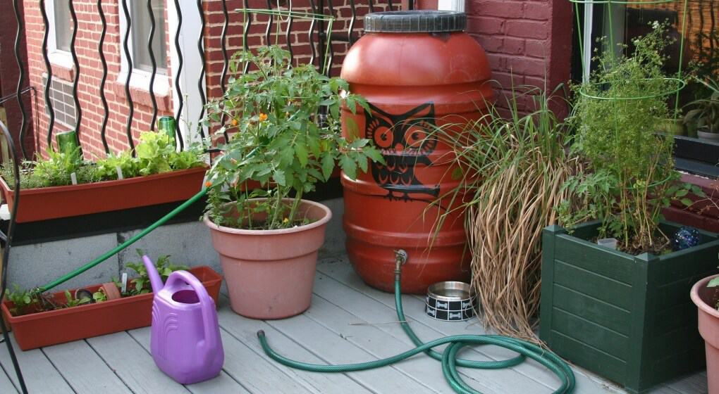 Cool rain barrel and back porch garden
