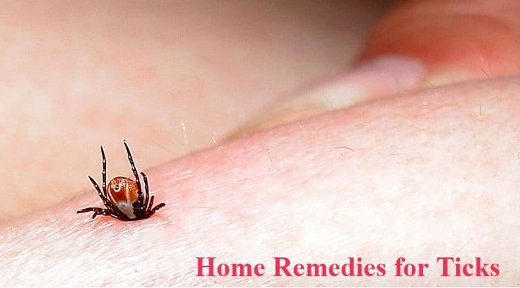 Home remedies for ticks