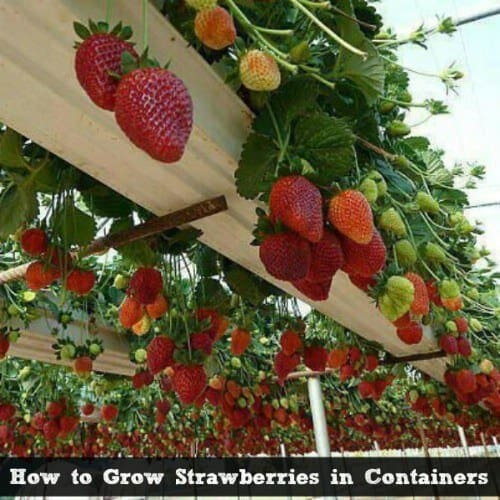 13 Edible Plants That Thrive In Containers