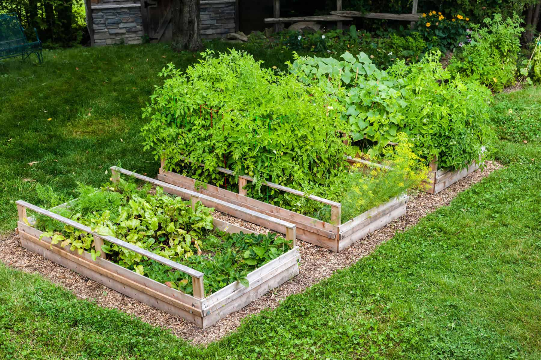 31 Ways to Make You an Organic Gardening Guru
