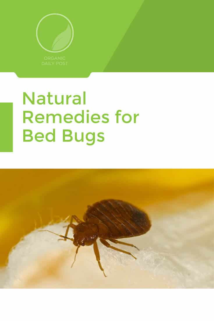 Get rid of bed bugs with these non-toxic natural remedies and take back your bedroom!