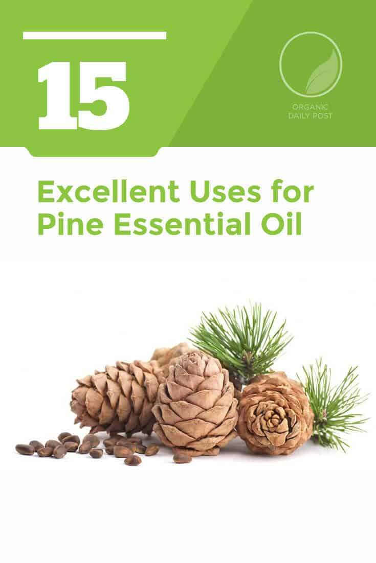 Pine essential oil improves your digestive system, gives you beautiful skin and reduces inflammation and pain. It is a wonderfully fragrant essential oil with many excellent uses.