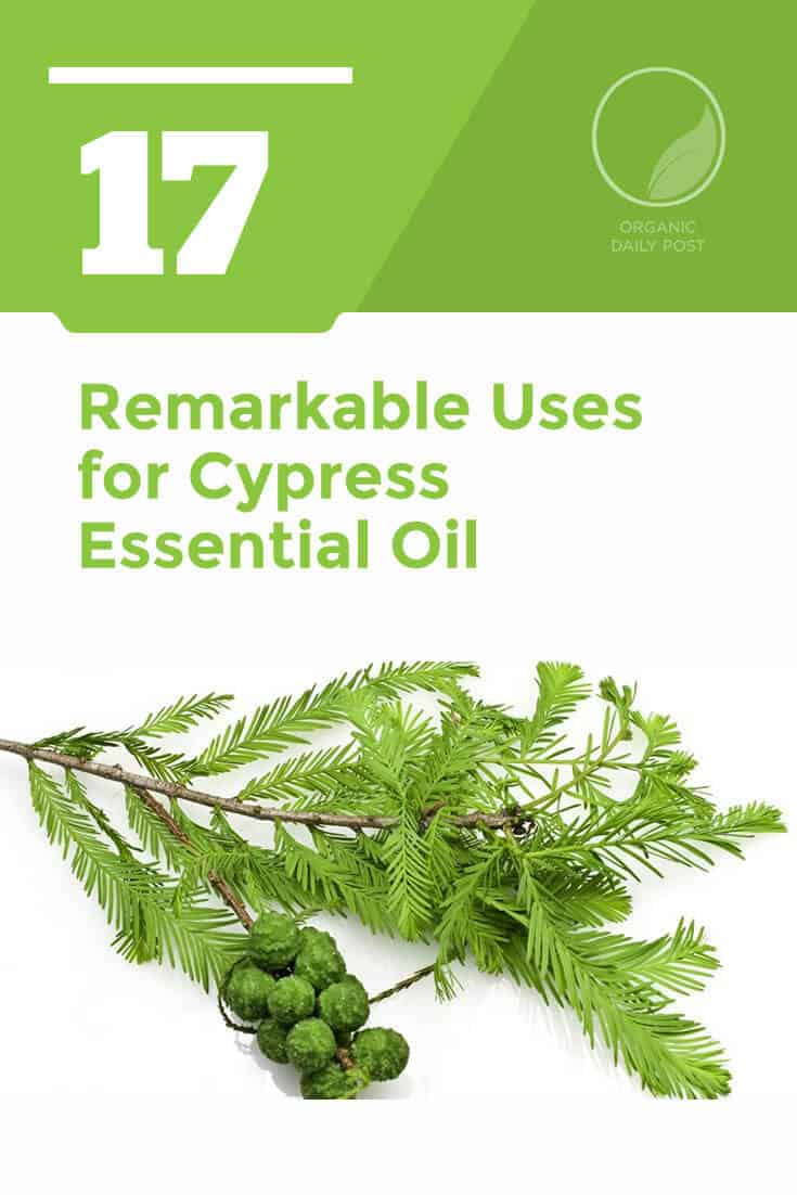 Cypress essential oil is good for your respiratory system, digestive system, muscles, mood and skin. It has a bold, spicy, evergreen forest scent, too, that makes it a real pleasure to use.