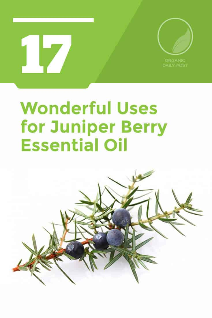 Juniper berry essential oil is good for your digestive system, muscles, joints and skin. It has a fresh, earthy fragrance that has a hint of pine and fruitiness.