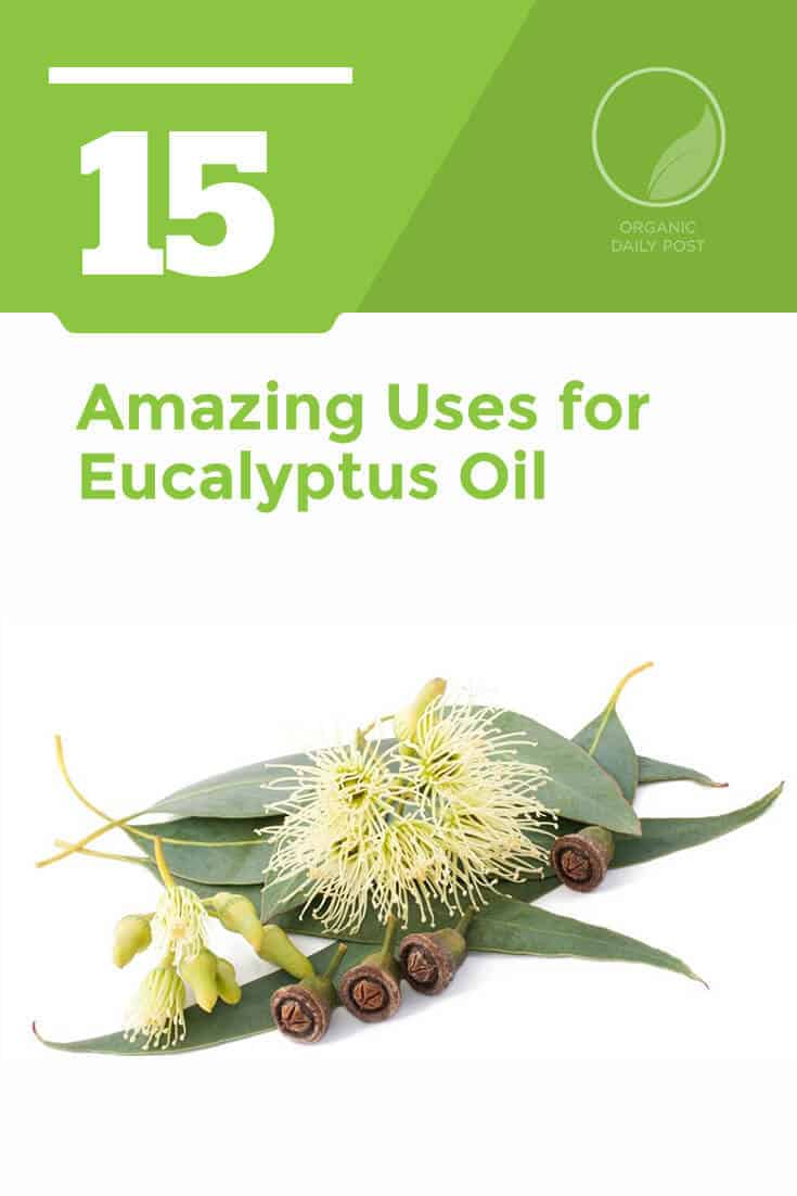 Eucalyptus oil has been used by the indigenous people of Australia for centuries to relieve everything from aches and pains to cold and flu symptoms.