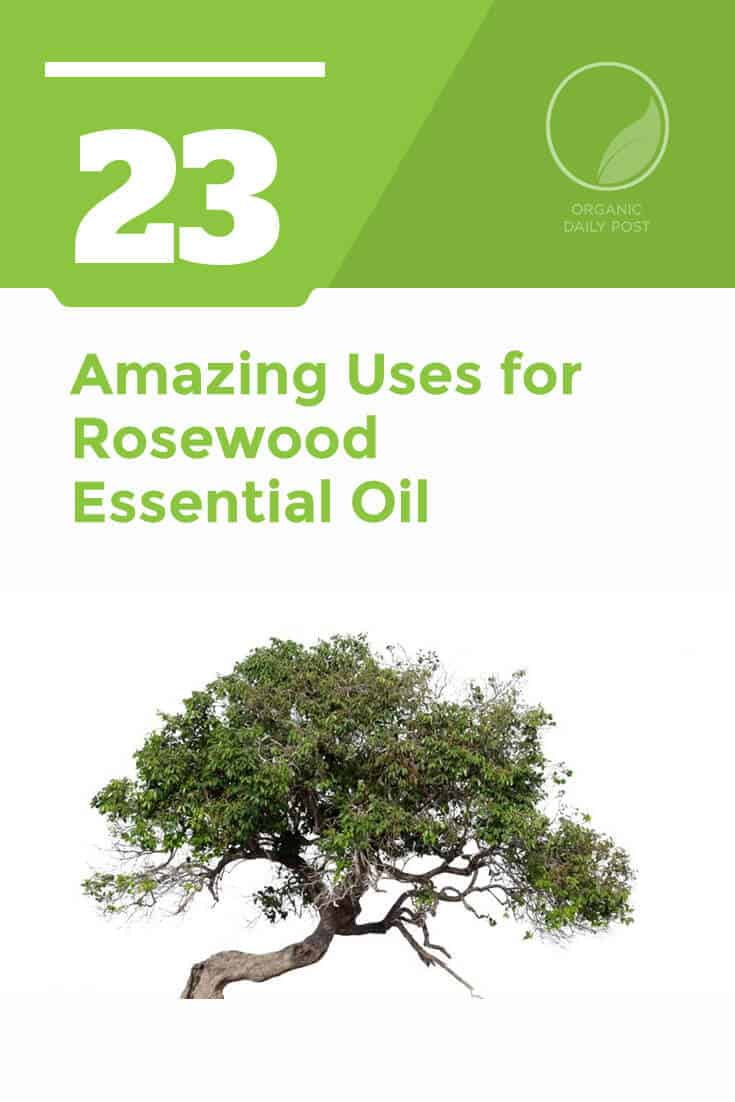 Rosewood essential oil is used to treat skin conditions, upper respiratory infections, headaches, nerve pain and more.