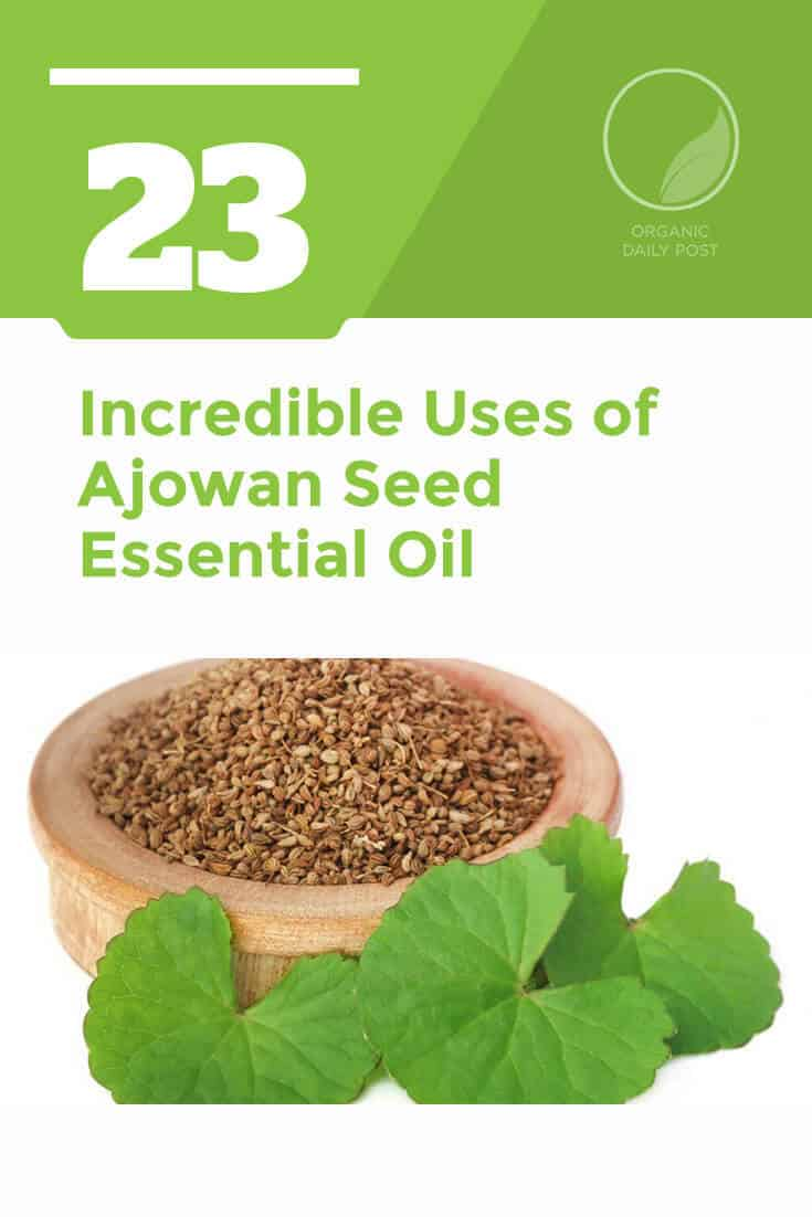Ajowan or ajwain seed essential oil is used in to treatment upper respiratory infections, headaches, arthritis, ulcers and more.