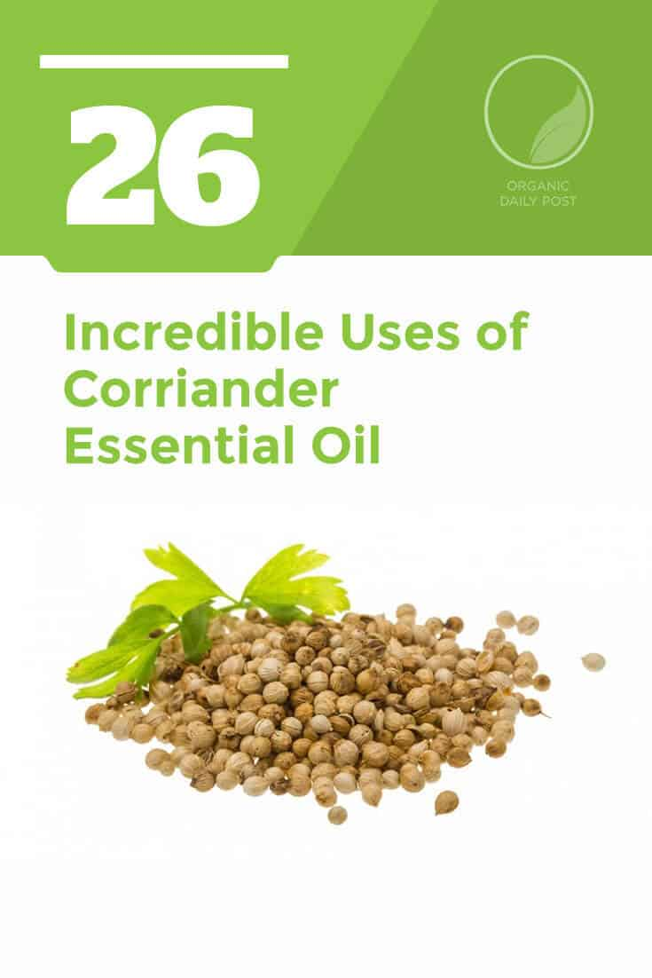 Coriander essential oil is used to treat bacterial and fungal infections, arthritis, pain, inflammation, fatigue and gout.