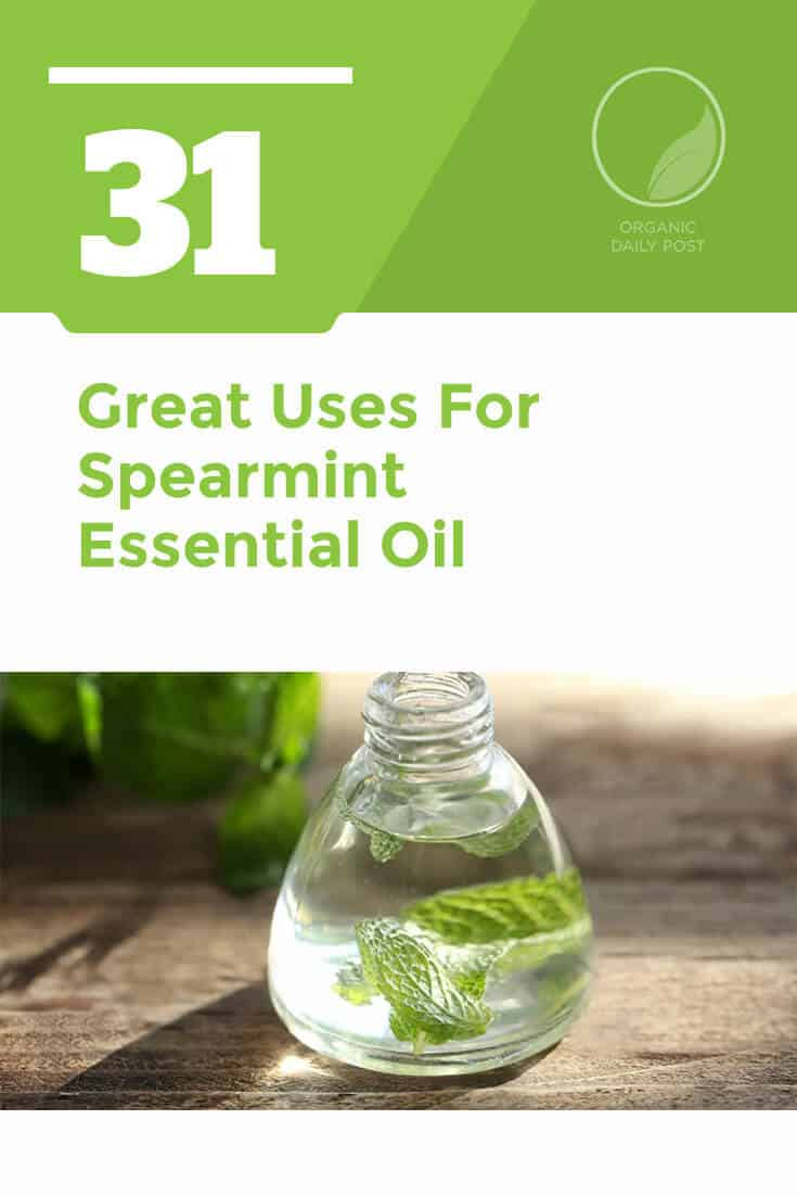 Spearmint essential oil is used to improve digestion, treat viruses, get rid of headaches, boost your metabolism and cool the body.