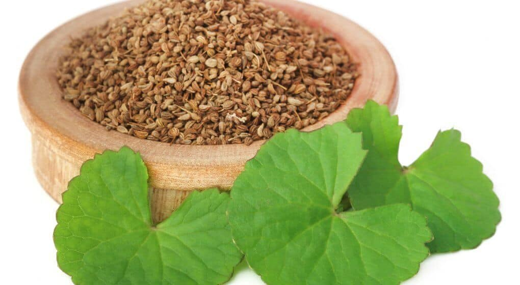 ▷ 23 Incredible Uses of Ajowan Seed Essential Oil