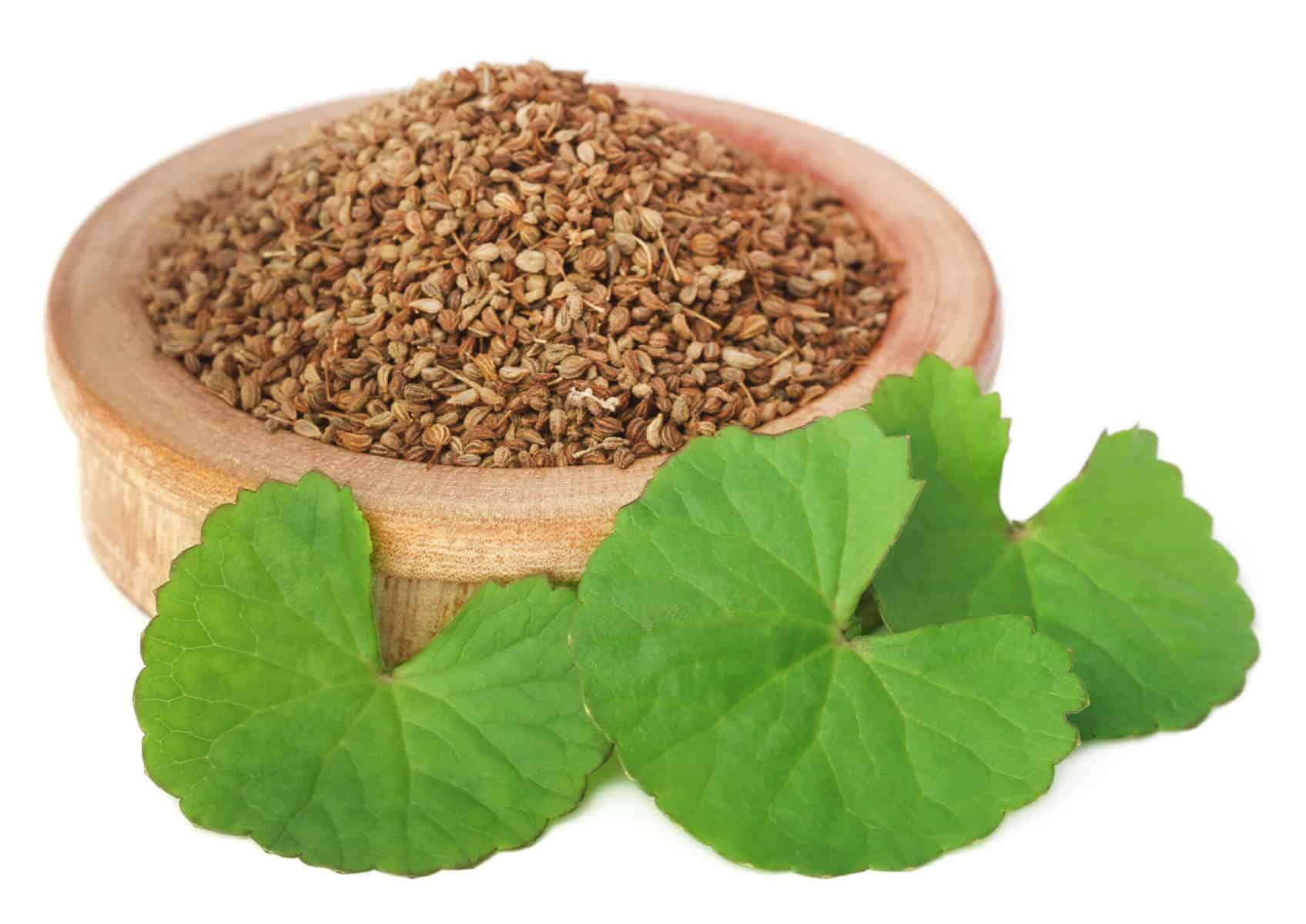 Ajwain/ajowan seeds with thankuni leaves