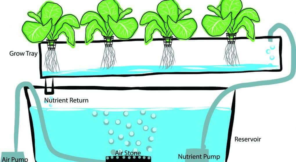 Aquaponic Grow Kits