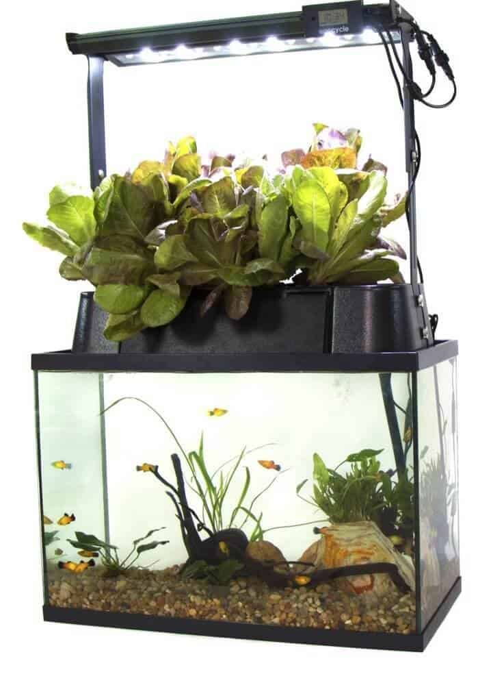 Best aquaponic grow kits for home gardeners 2018 update for Eco fish tank