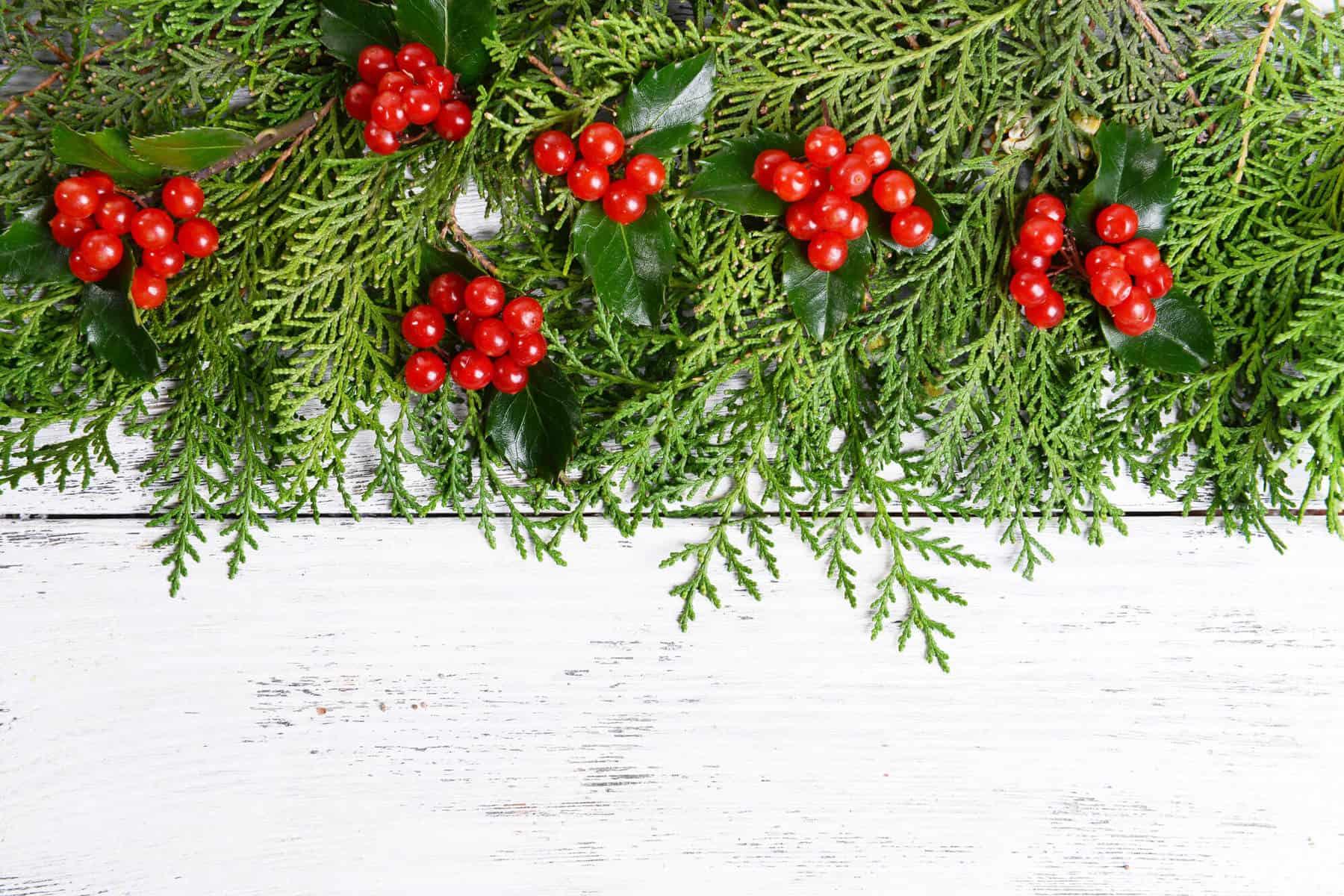 Just Cut Christmas Tree Fragrance
