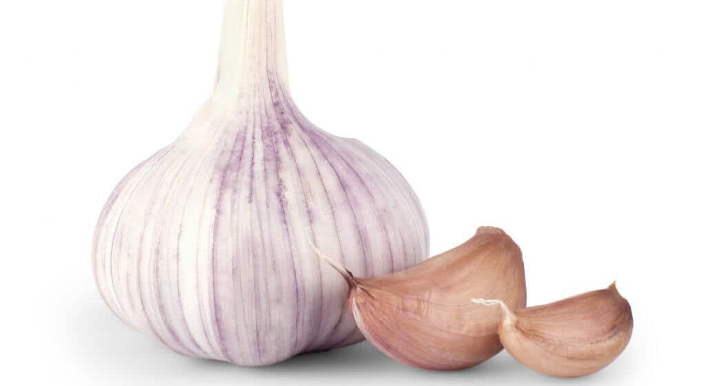 Best Garlic Supplement