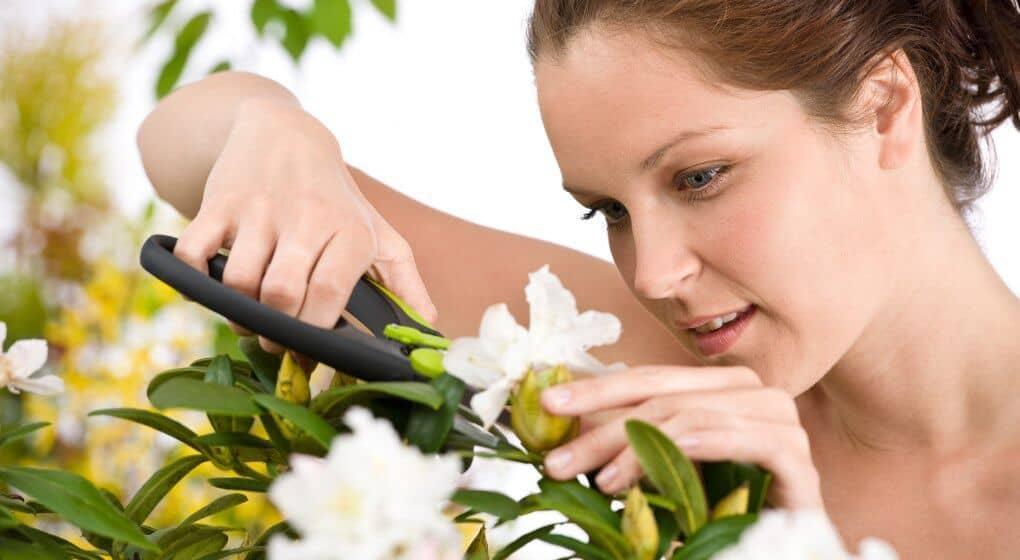Best Pruning Gear for Backyard Gardeners