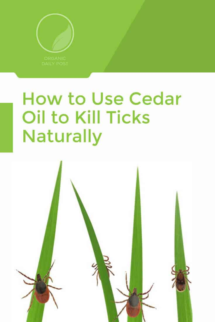 Where to buy and how to use cedar oil to repel ticks and other insects in your yard, on your pets and on your clothes with a ZERO toxin solution.