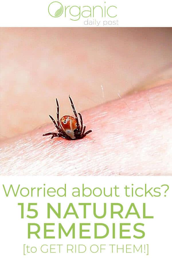 Can You Get Rid Of Lyme Disease Naturally