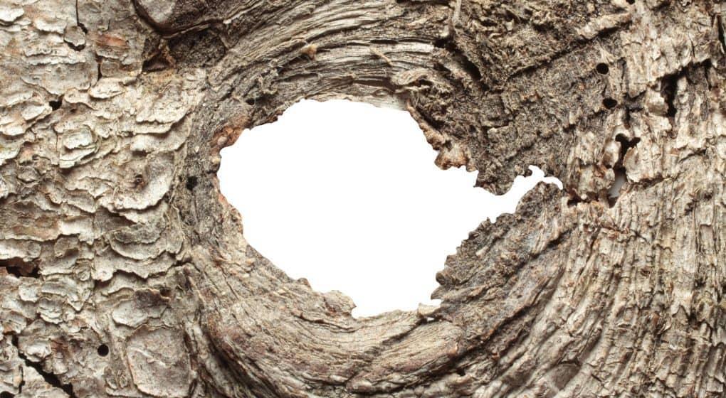 The Health Benefits of Pine Bark Extract