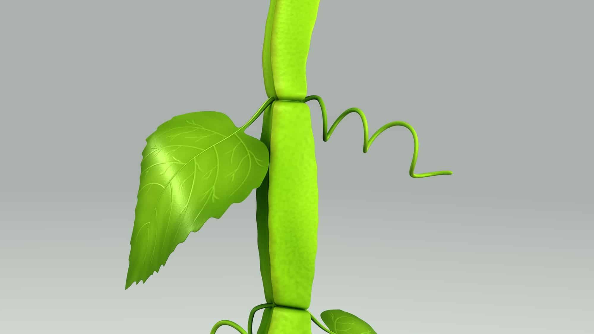 What Are the Benefits of Cissus Quadrangularis?