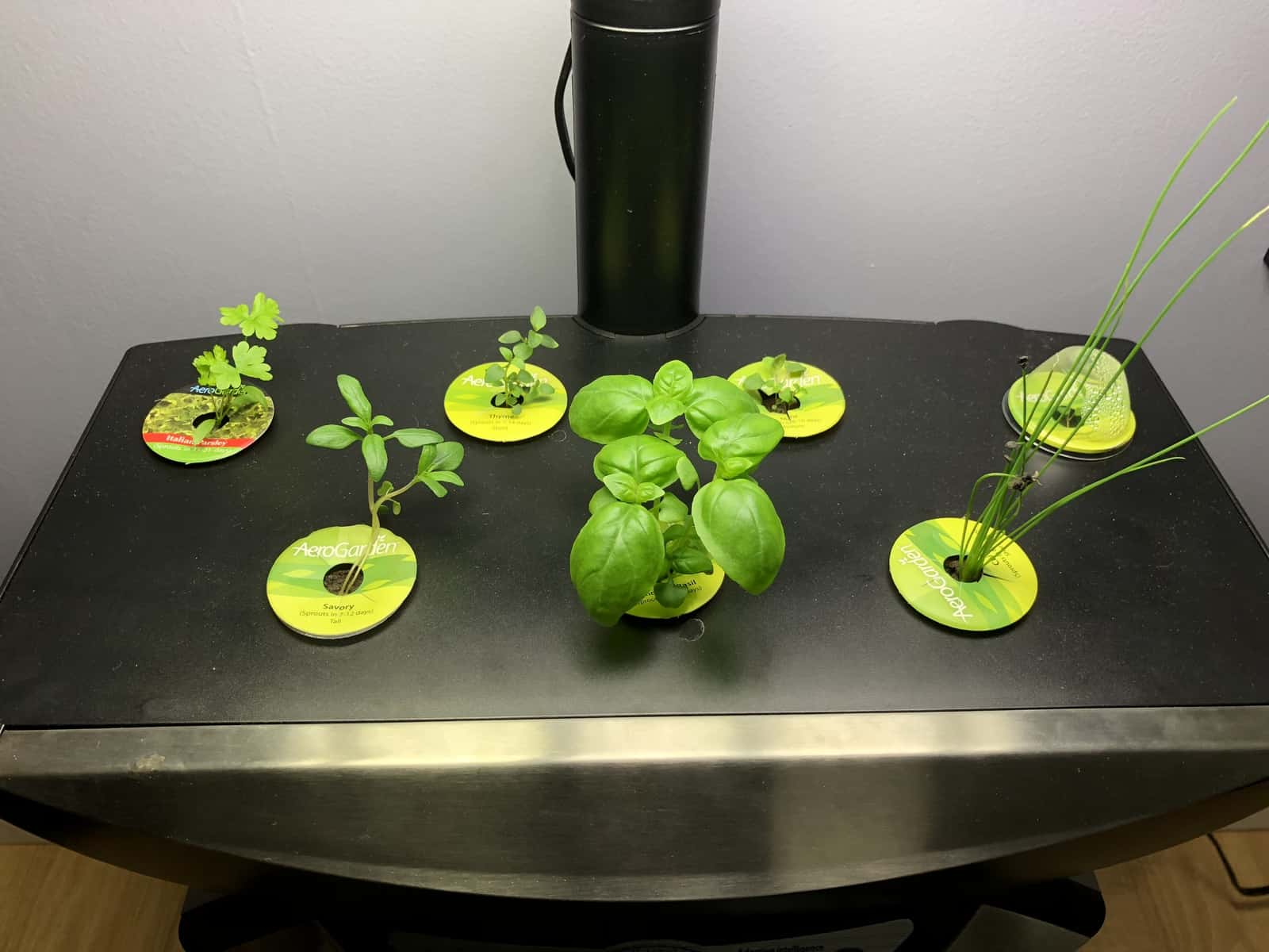 Grow Indoor Herb Gardens with Miracle-Gro