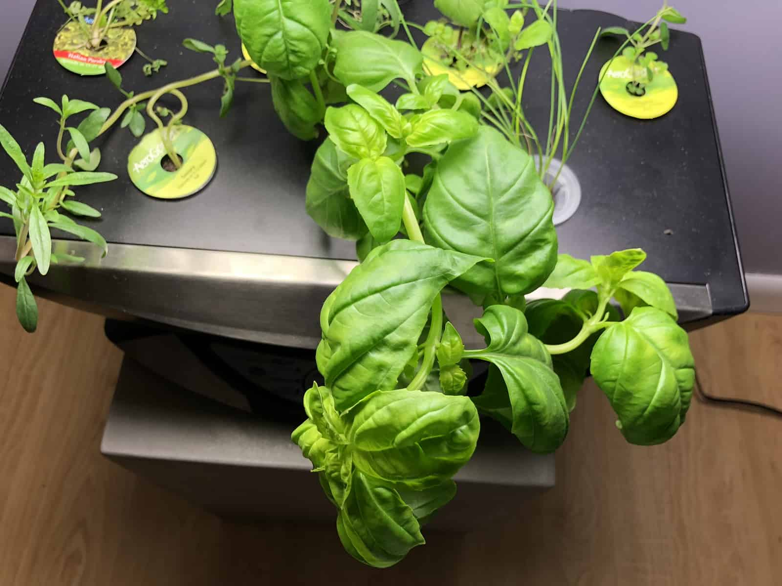Plug & Grow easy indoor gardening