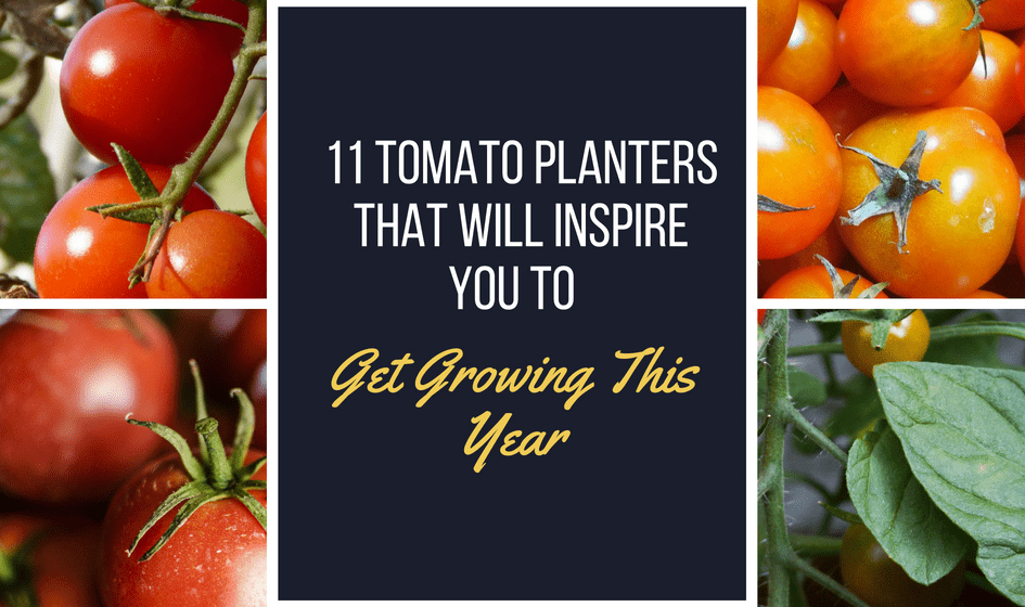 11 Tomato Planters That Will Inspire You to Get Growing This Year