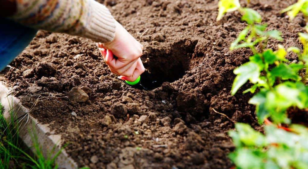 Choosing the Best Hori Hori Knife for Gardeners