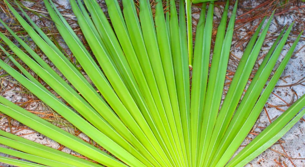 The Best Saw Palmetto Supplements