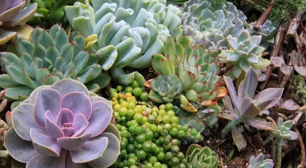 7 Sensational Succulents