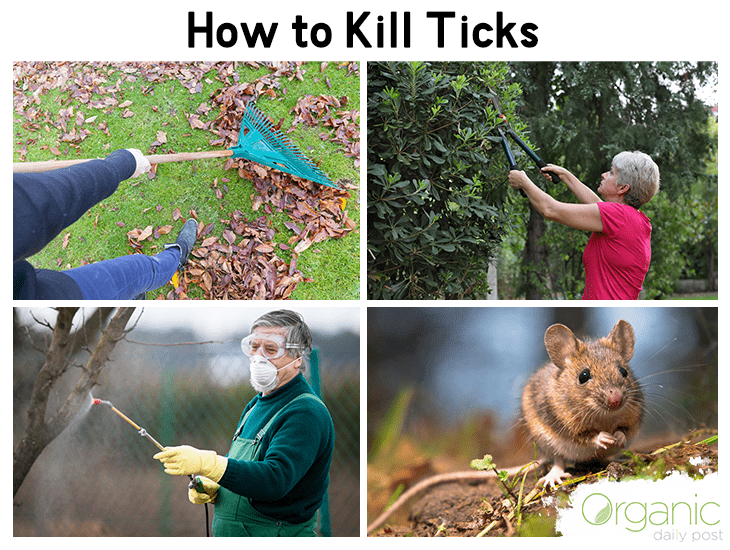 How to Get Rid of Ticks - Natural & Effective Methods ...