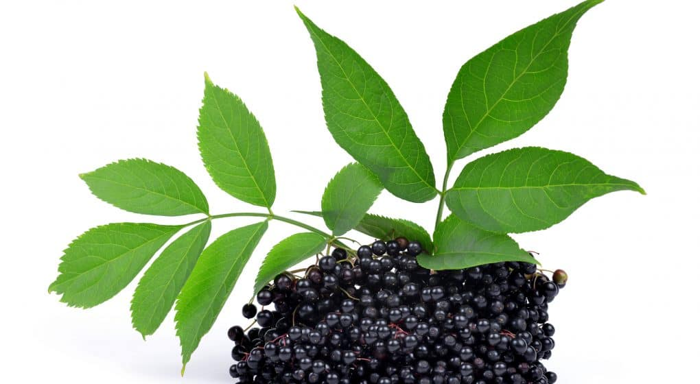 5 Mouthwatering (And Healthy!) Elderberry Recipes